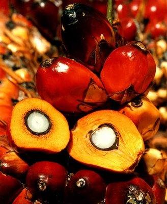 Pálmaolaj – pálmavaj – pálmazsír